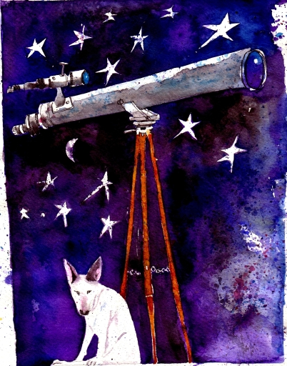 Stargazing - giant telescope with Keefy the Engish Bull Terrier